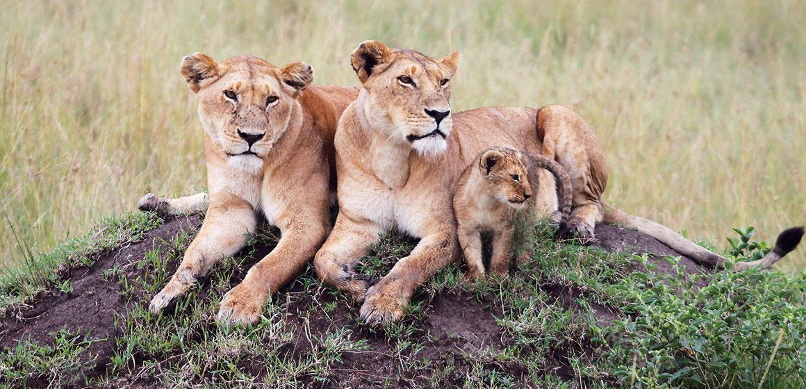 Kenya Tanzania Top 5